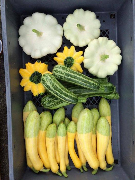 いろいろな珍しいお野菜に挑戦されています